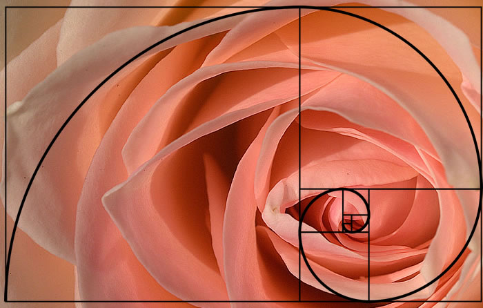 golden-spiral-applied-photography-2(1)