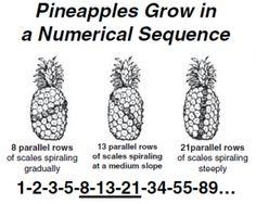 pineapple fibonacci