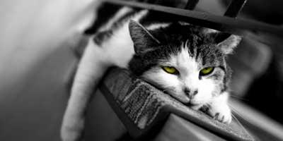 bored-cat-1
