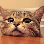 bored-cat-2